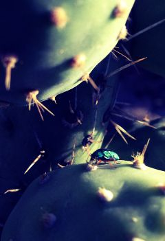 bug green fruits naturephotography sunset