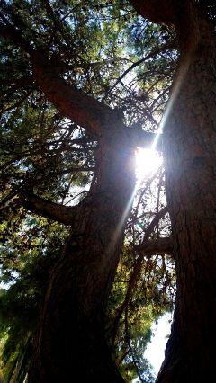 autumn tree trees sun hope