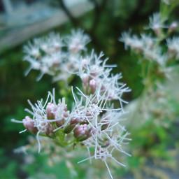photography flower msflowers цветы freetoedit