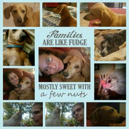 collage cute love petsandanimals mobilephotograpy freetoedit