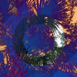 freetoedit artistic dramatic effect palmtree