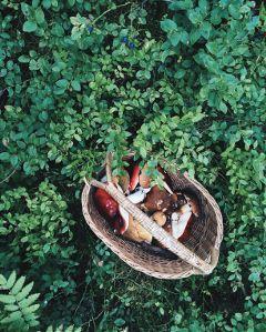 freetoedit mushroom mushrooms berries berry