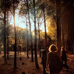 forrest exploring travel travelers trees