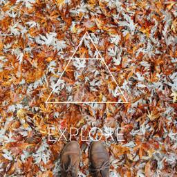 FreeToEdit explore autumn fallleaves
