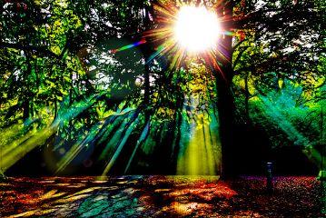 freetoedit trees forest wood sun