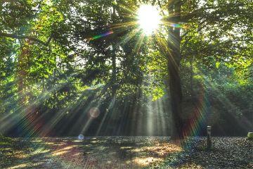 freetoedit nature photography photograph photo