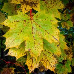 autumn fall colour colourful leaves
