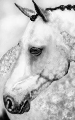 wdptwotone blackandwhite beautiful horse grey