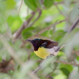 bird birdsphotography birdphotography birds yellow