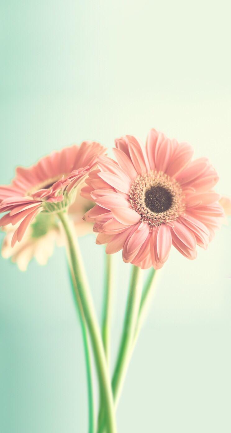 Картинки для ватсапа цветы новомодные, для любимой подруге