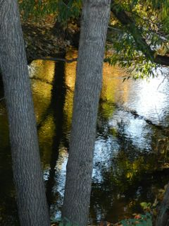 photography sunrise fall reflections trees