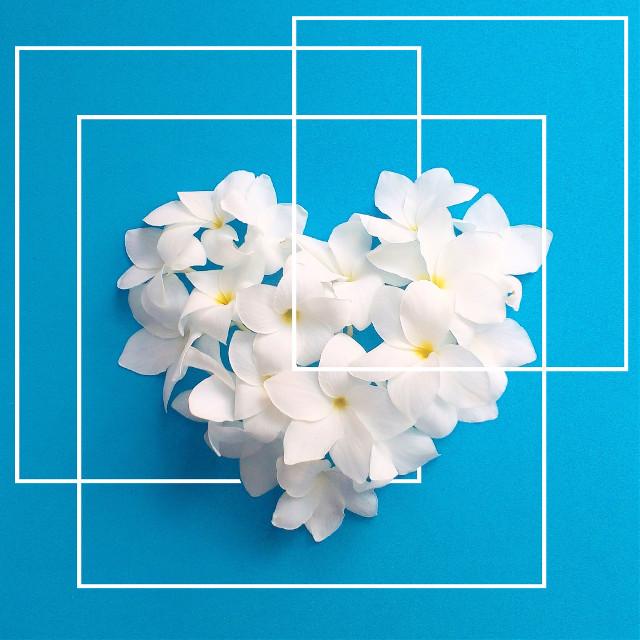 #FreeToEdit  Flower ||