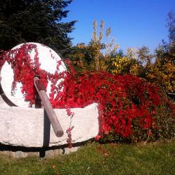 autumn nature travel freetoedit