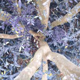 freetoedit jungle trees plants vegetation
