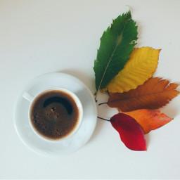 autumn autumnleaves coffee coffeelover coffeeart