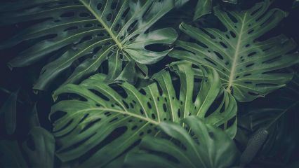 freetoedit plant green nature texture