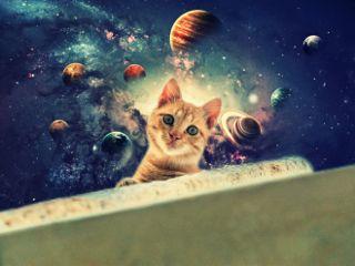 freetoedit cat cosmos