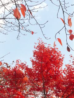 nature red
