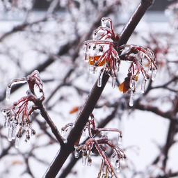 autumn winter trees ice snow