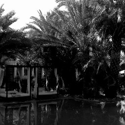 freetoedit blackandwhite paradise palmtrees summer