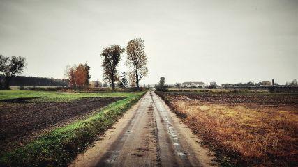 landscape road nature freetoedit